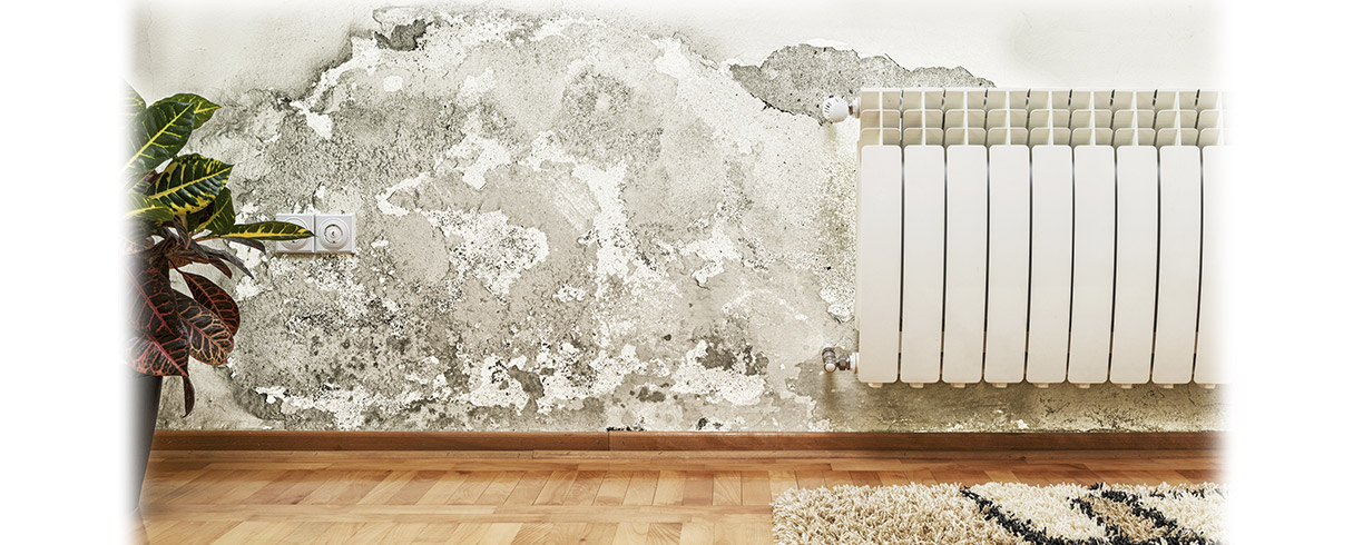 How to Detect and Eliminate Mould